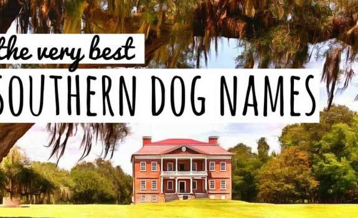 southern-dog-names