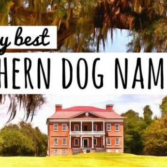 50 Space Dog Names For Fido: Stellar Canine Name Ideas!