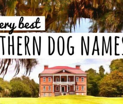 30+ Dog Names That Mean