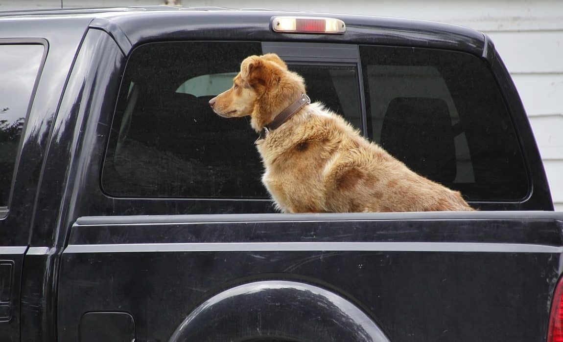 6 Best Dog Crates For Truck Beds Keeping Your Pooch Safe
