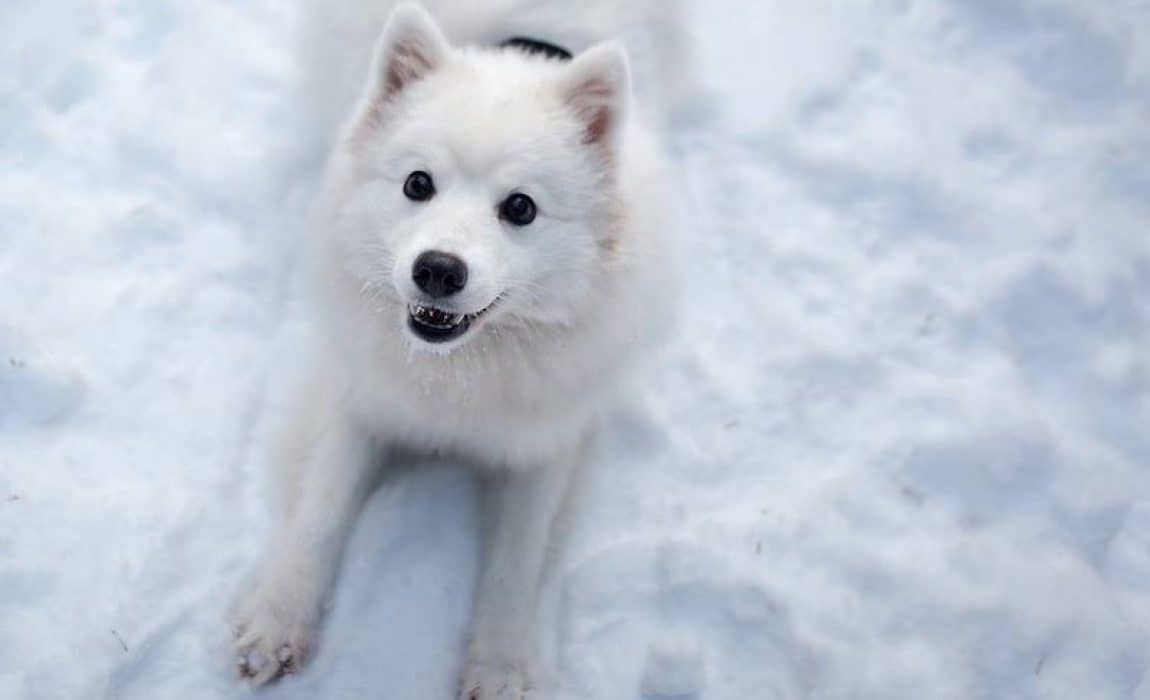 100+ Wondrous White Dog Names For Your Light-Furred Four-Footer!