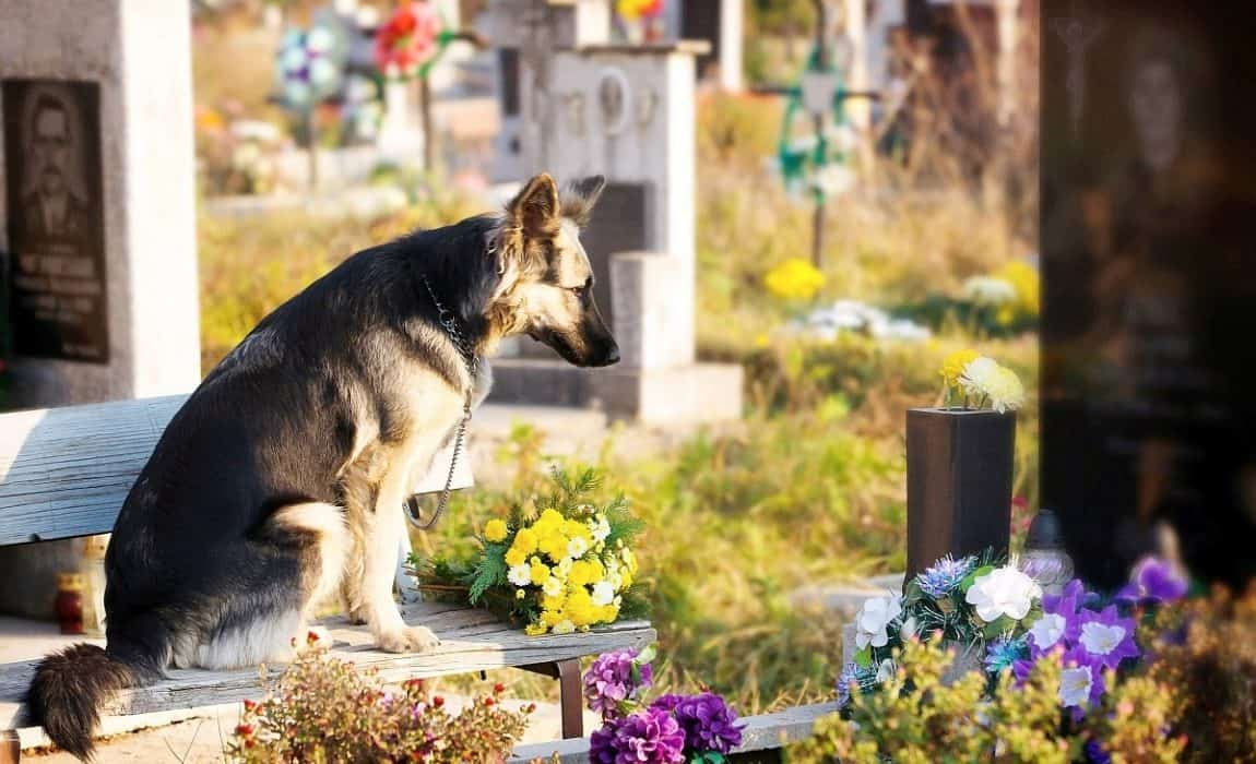 Can I Bury My Dog In My Backyard - acompleteimpossibility