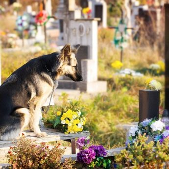 Cost of Pet Cremation