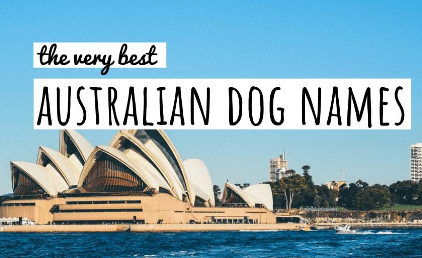 australian-dog-names