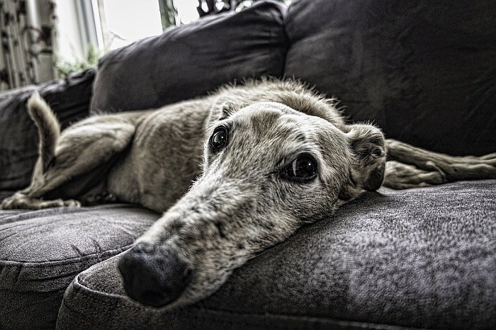 glucosamine for old dogs