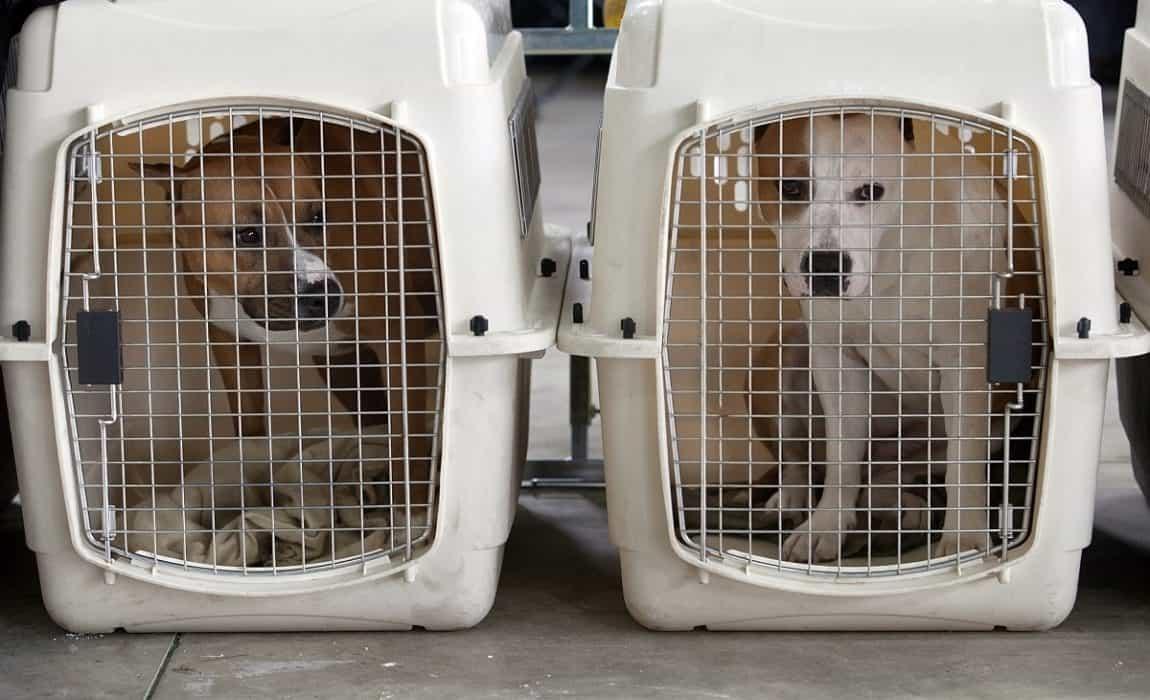 large and extra large dog crates