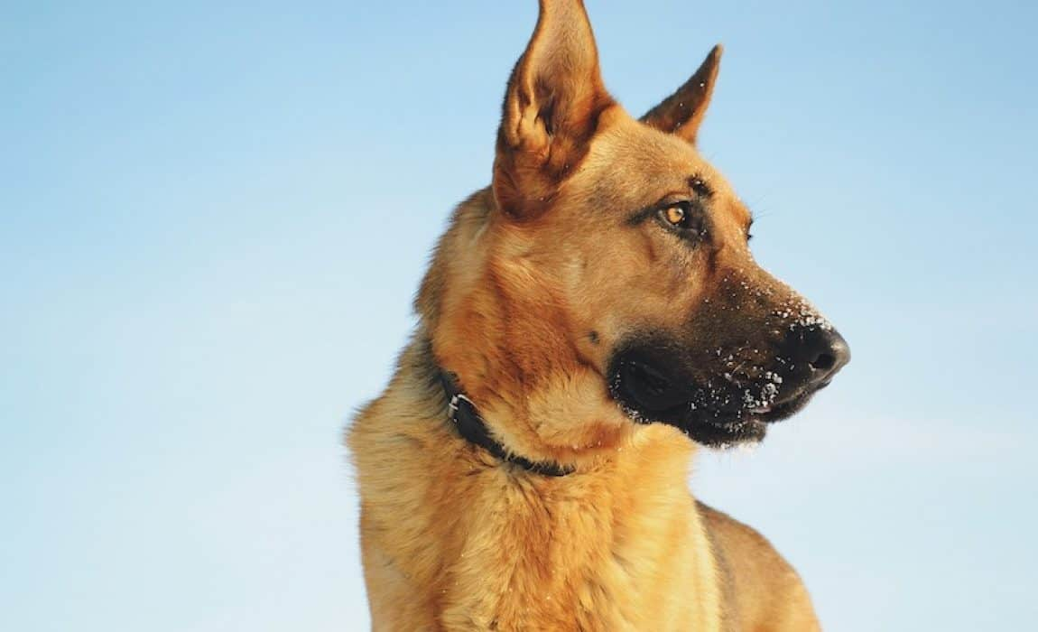 names-for-big-dogs
