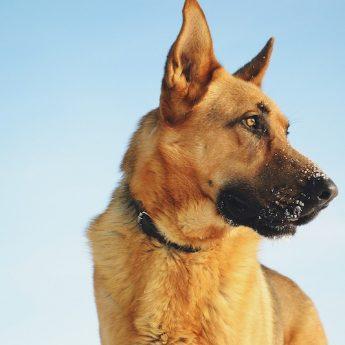 90+ Alaskan Dog Names: Great Names For Huskies, Malamutes, & More!