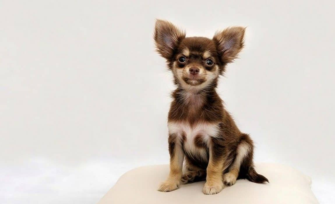 names-for-small-dogs
