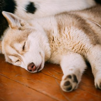 How Many Puppies Can Dogs Have? Litter Size & Influential Factors