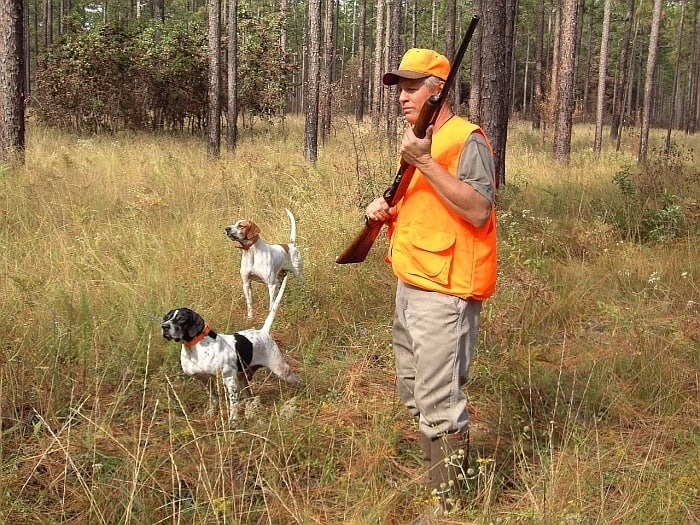vests for hunting dogs