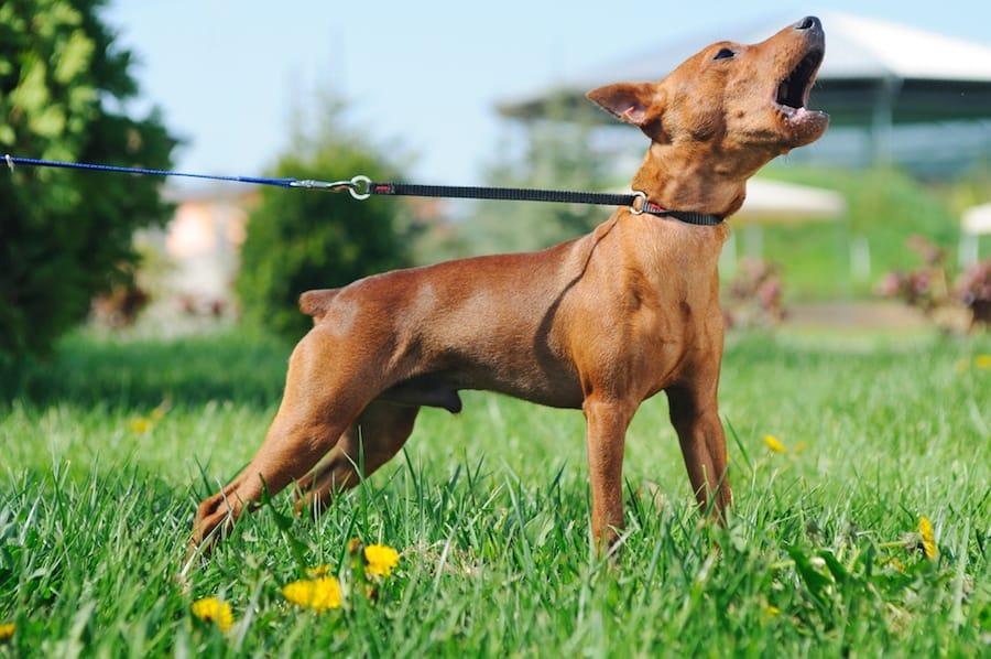 Dog Training Vocabulary