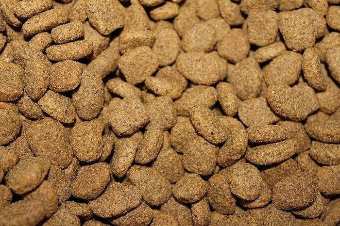 alligator based dog food