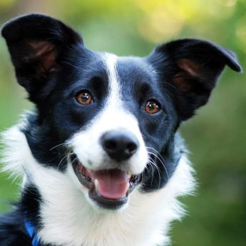 Dog Names That Mean