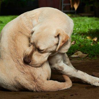 giving claritin to a dog