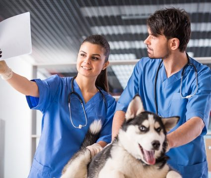 cost of dog x-rays