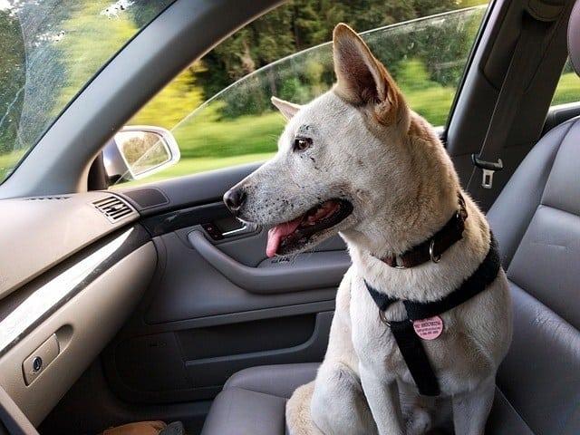 dog-inside-the-car