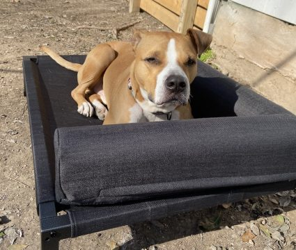 elevated-beds-for-dogs
