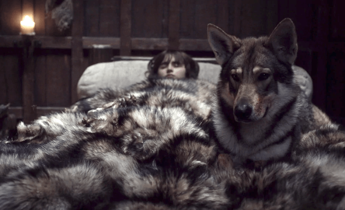 100+ Game of Thrones Dog Name Ideas: Direwolves, Characters