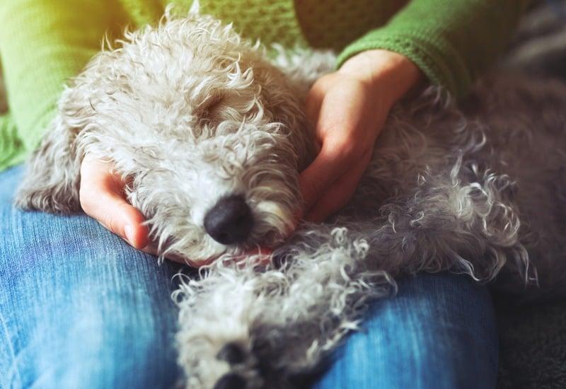 how to make dog sleep