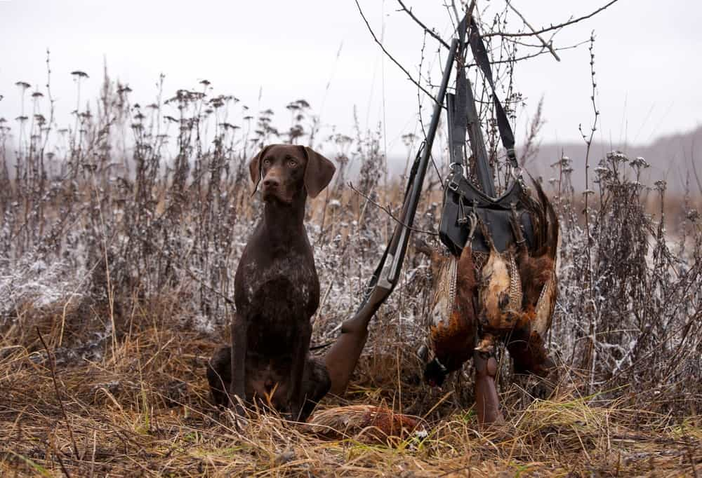 60 Hunting Dog Names Name Ideas For Hunting Hounds