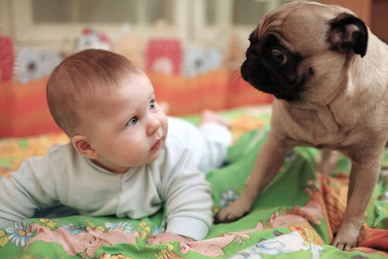 introducing-dog-to-baby