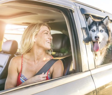 keeping dog cool in car