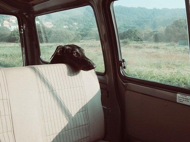keeping-dog-in-car