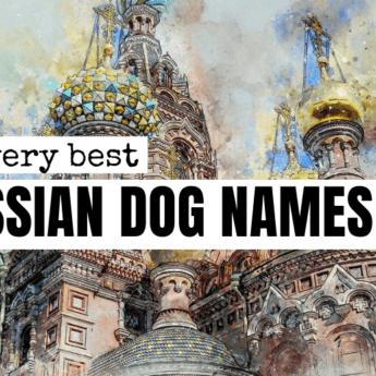 russian-dog-name-deas