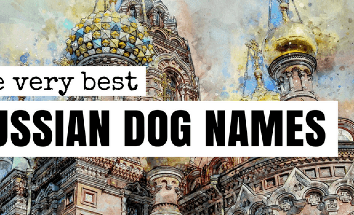 90+ Russian Dog Names: Slavic Names For Your Four-Footer!