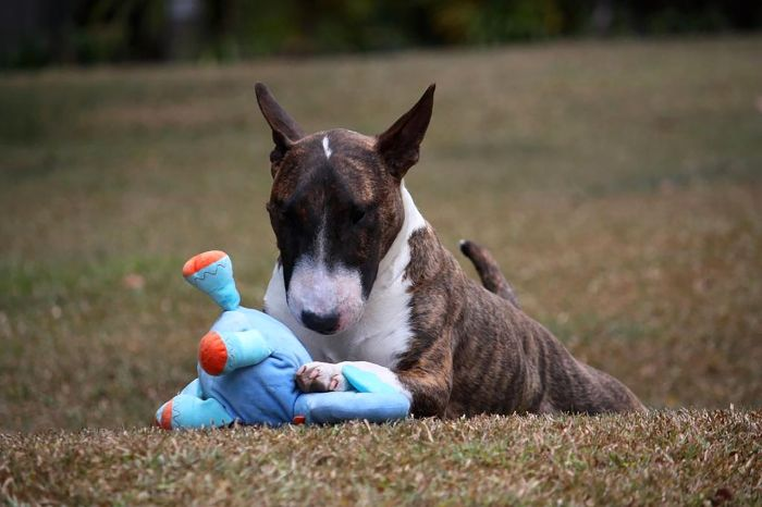 11 Best Indestructible Dog Toys For Aggressive Chewers