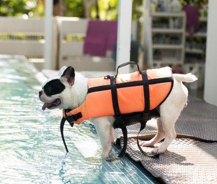 best-dog-life-vests