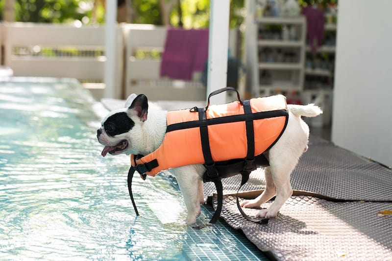 best-dog-life-vests