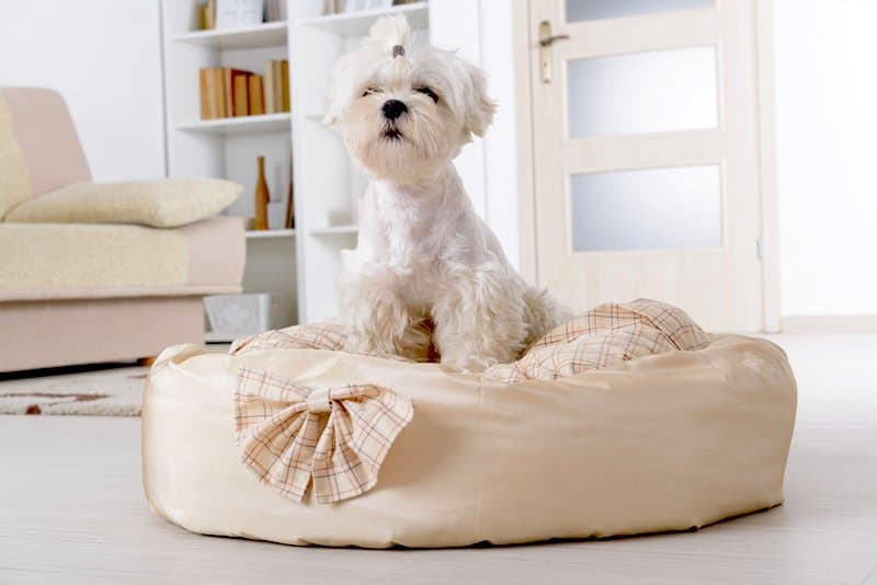 best luxury dog beds