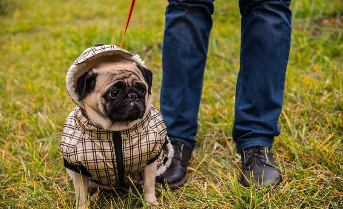 Dog coat works with harness
