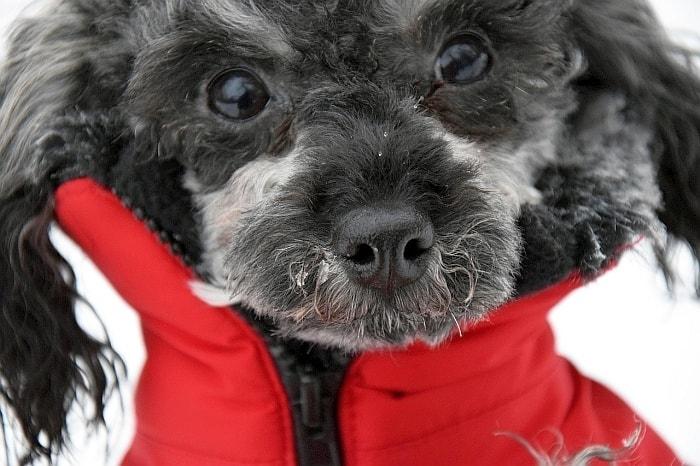 dog harness and coat combo
