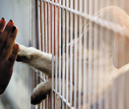 giving up dog at shelter