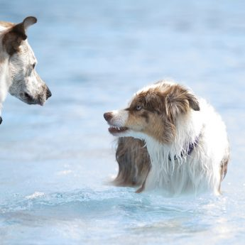 how to socialize aggressive dogs