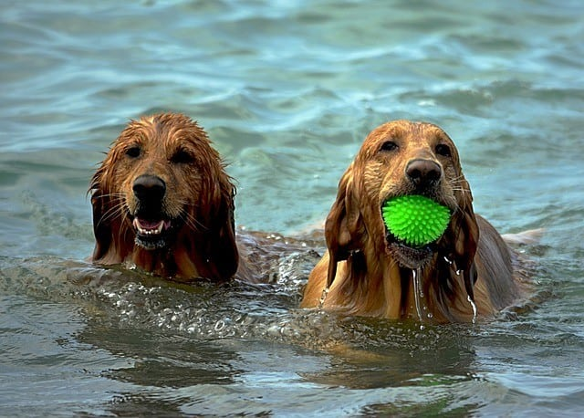 water-toys-for-dogs