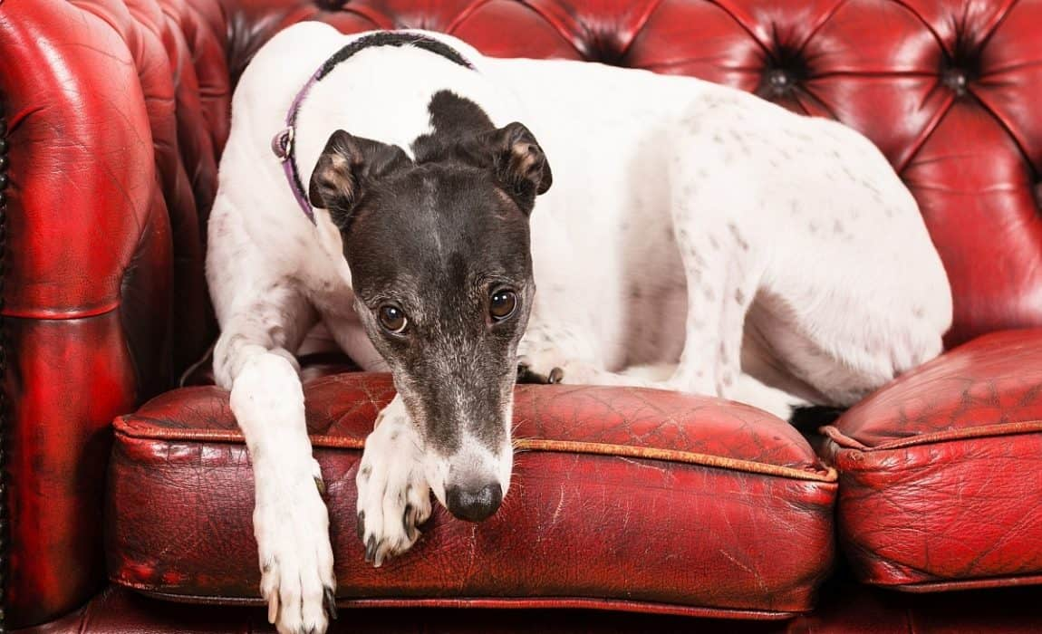 Beds for Greyhounds