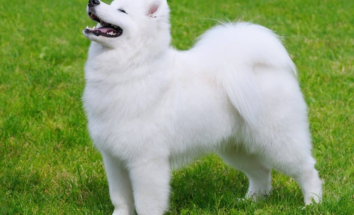 20 Most Beautiful Dog Breeds Our List Of The Prettitest Pups Around