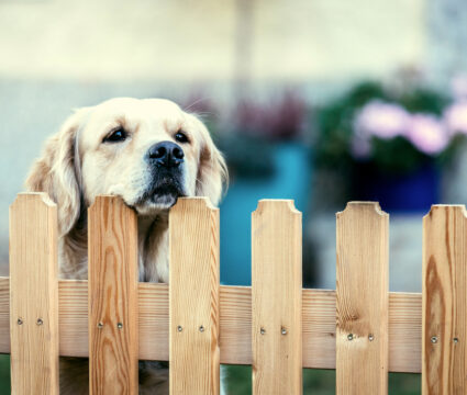 fences for dogs