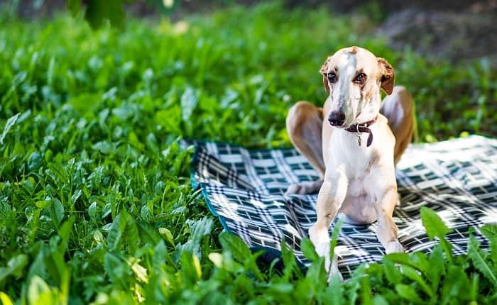 greyhound beds