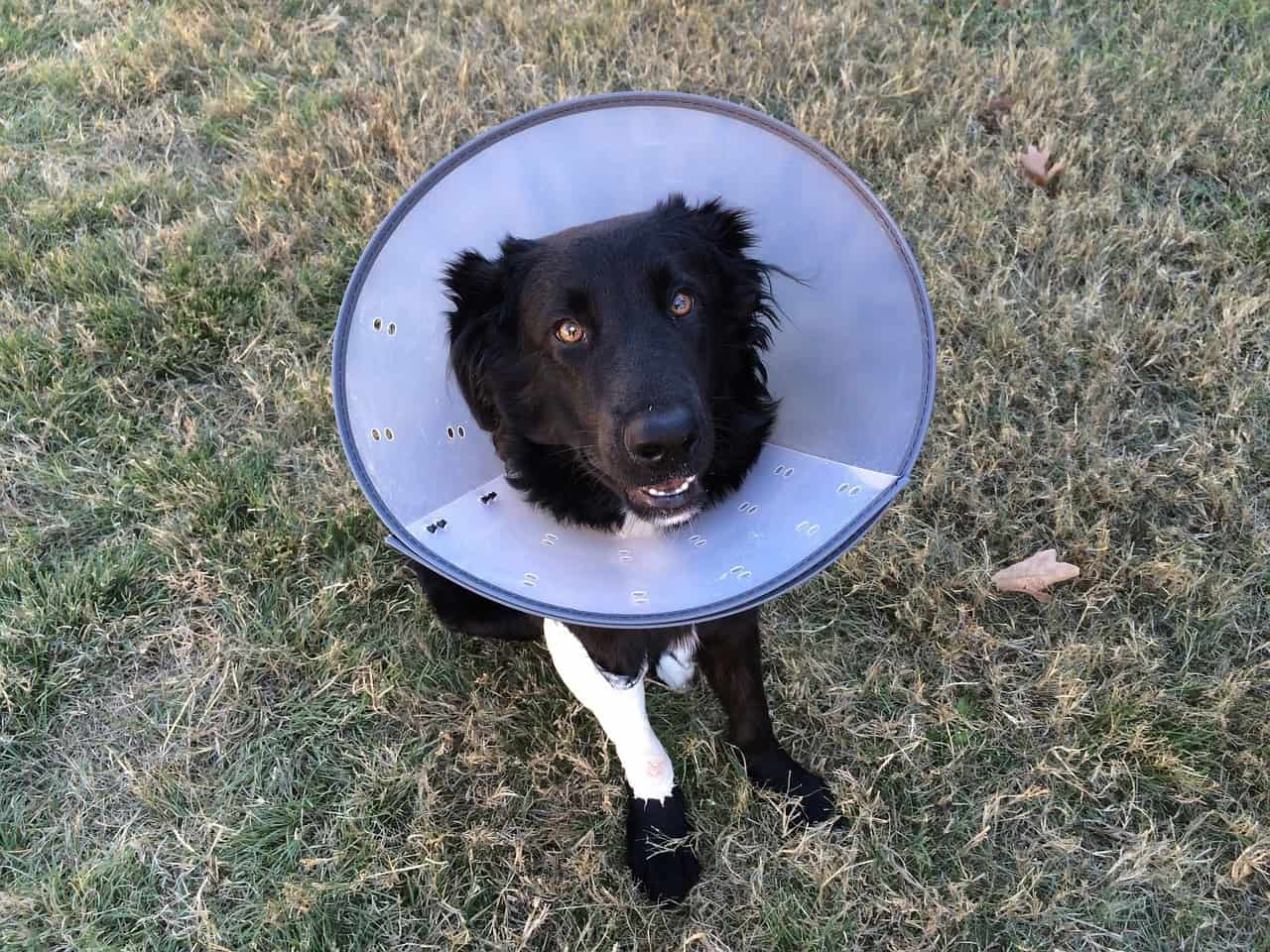 Pet Assure vs Pet Insurance