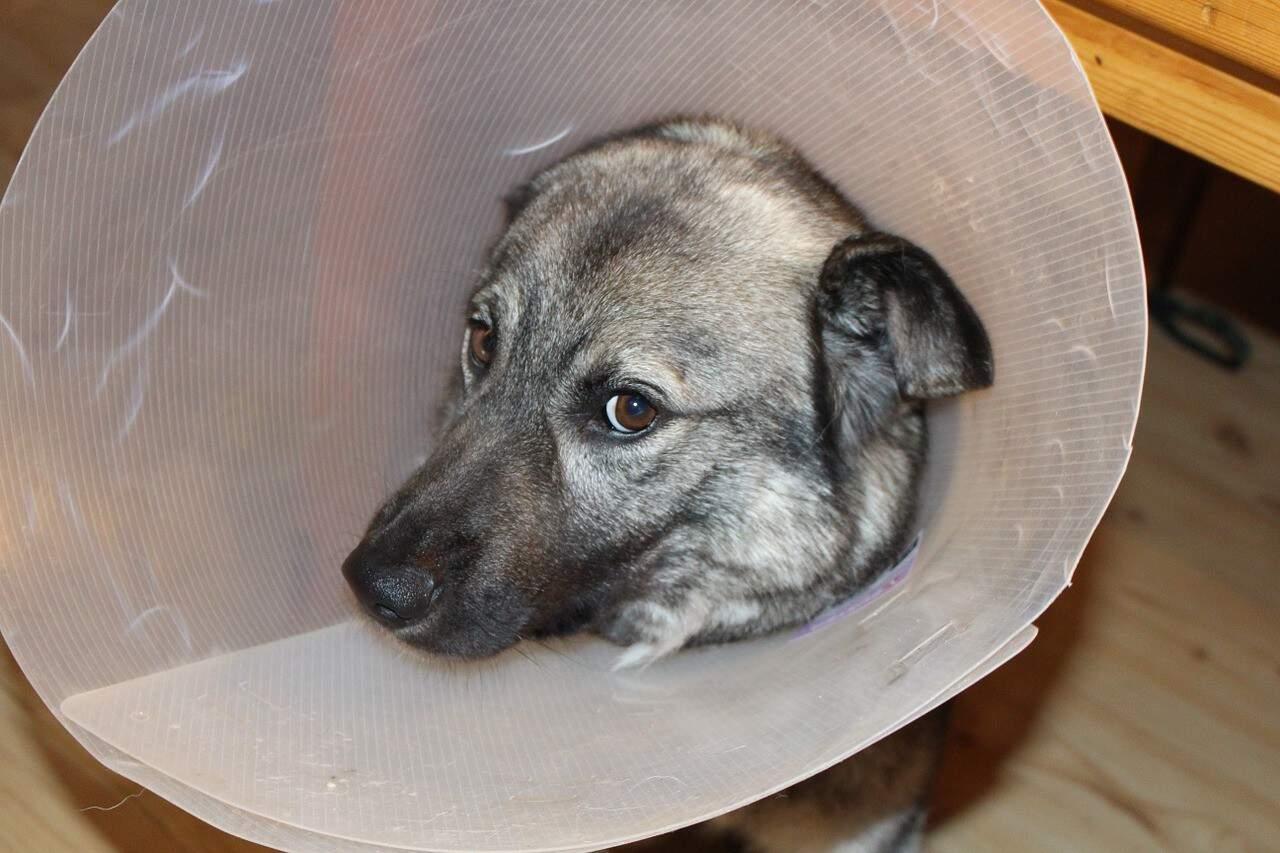 Pet insurance vs Pet Assure