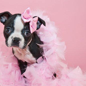 Puppy Period Panties