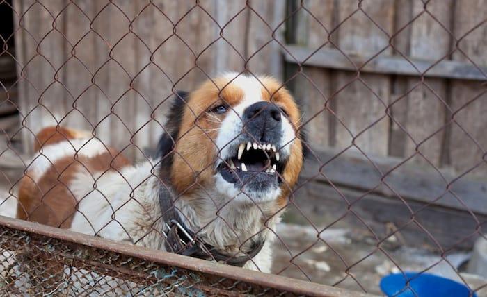 aggressive dog in cage