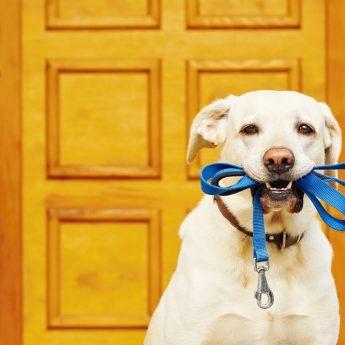 best chewproof dog leash