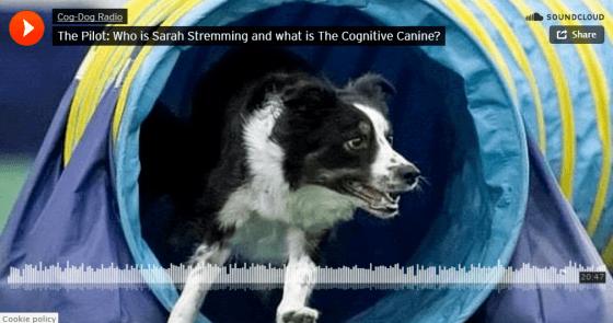 cog-dog-radio