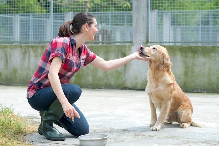 dog shelter worker